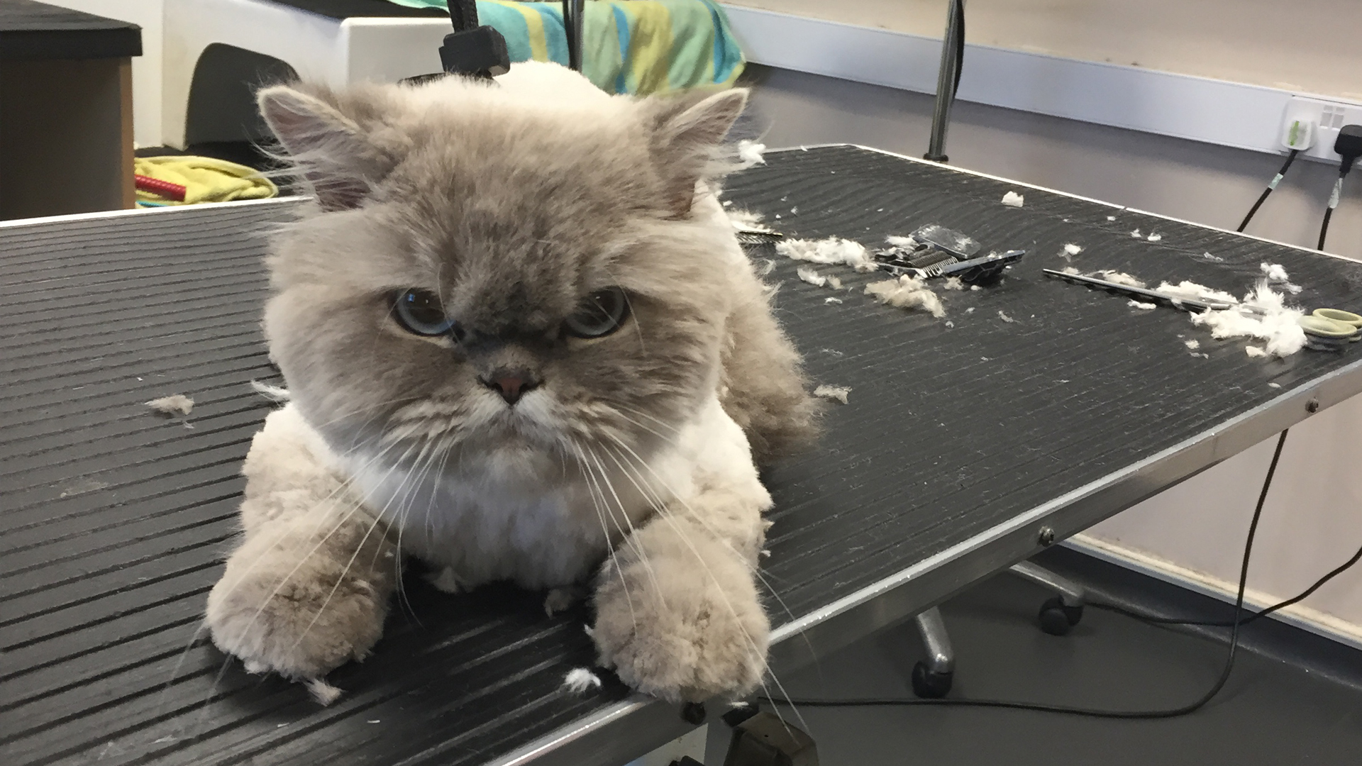 Cat Grooming Dog Grooming Bristol Cat Spa Wash Yate